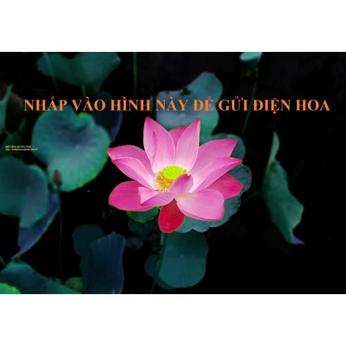 Điện hoa Quảng Nam - hoa tươi Quảng Nam
