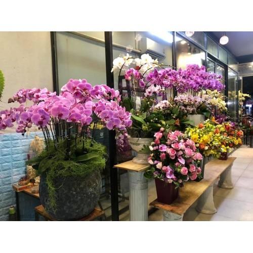 Shop hoa tươi Điện Bàn