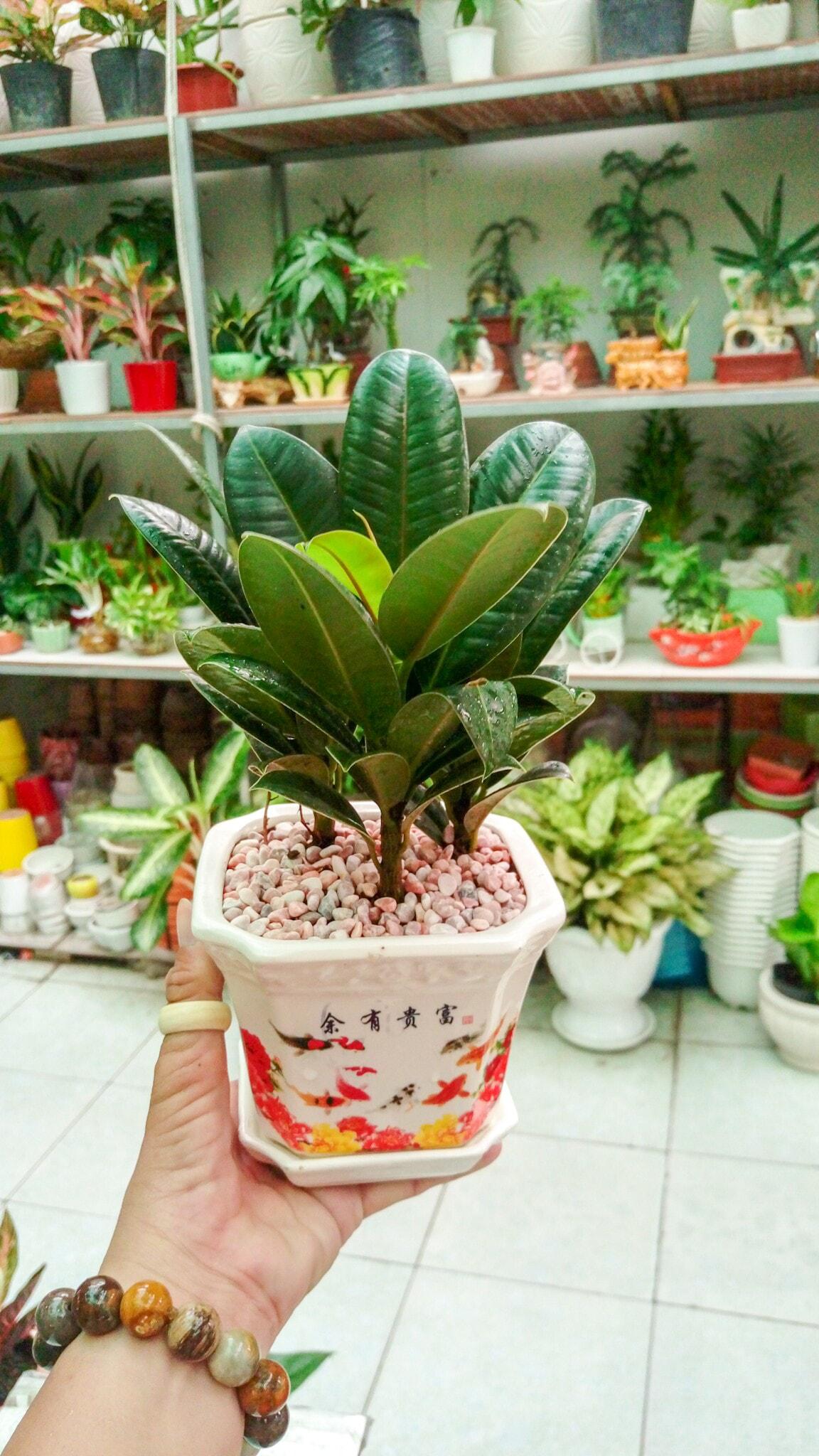 Shop hoa huyện Núi Thành