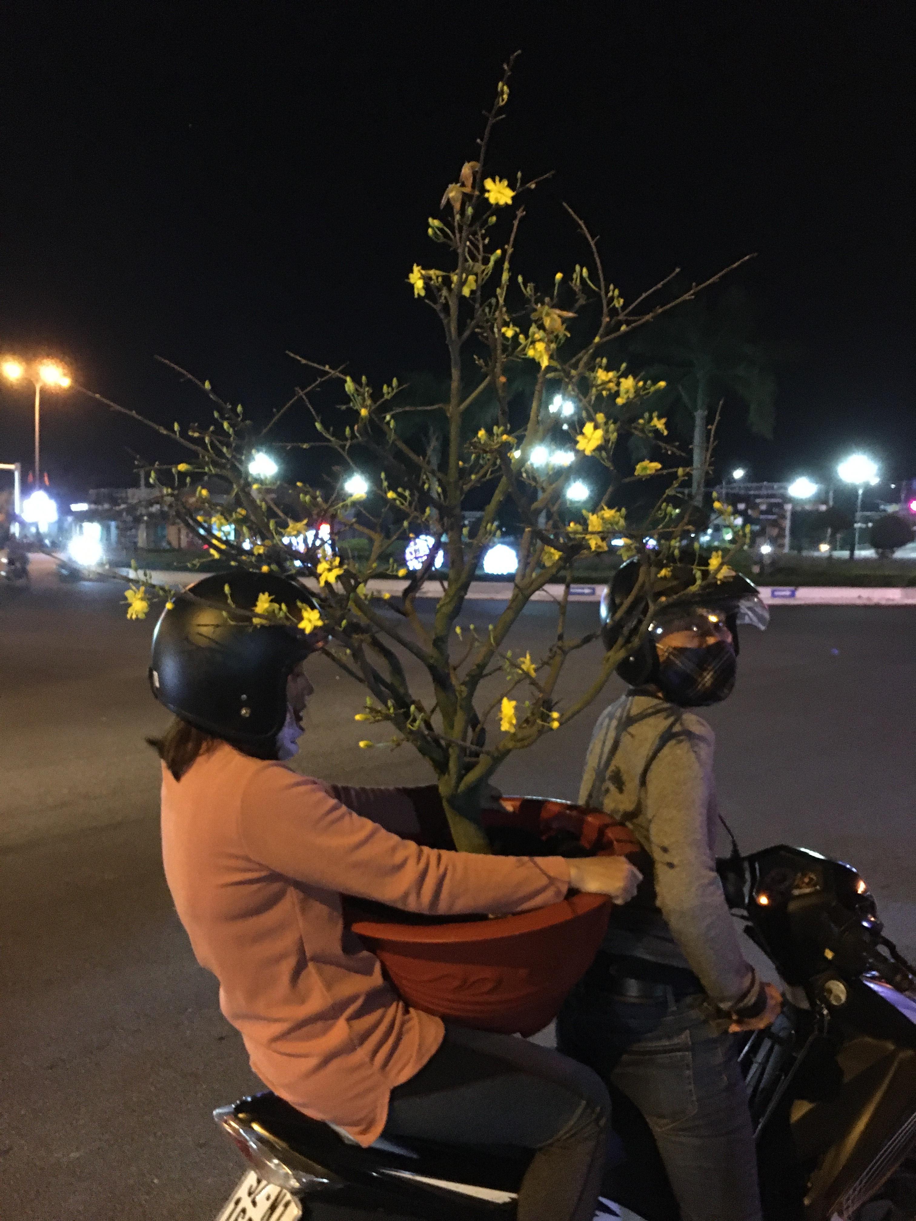 Hoa chưng Tết ưng ý
