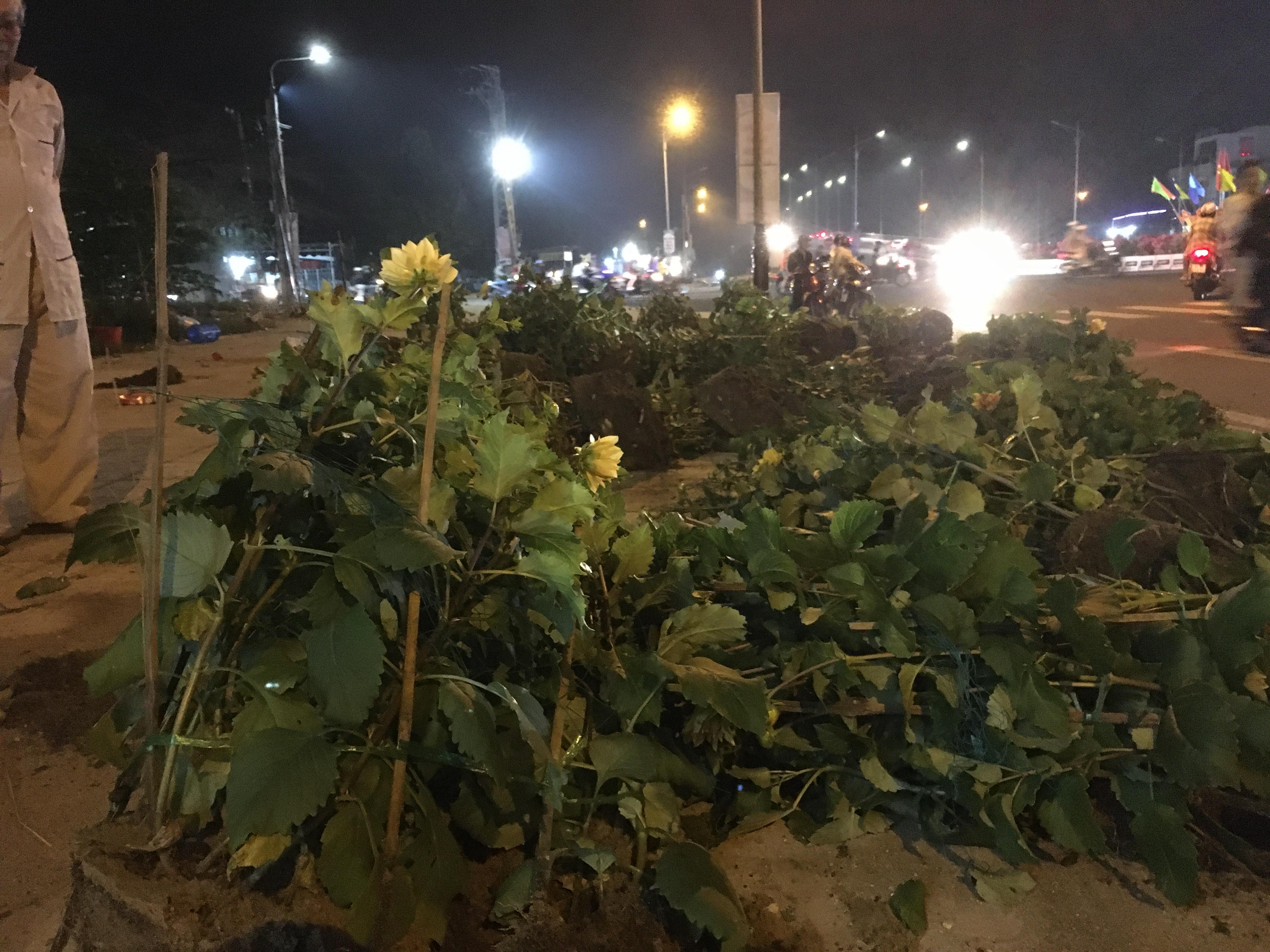 Hoa bị đập bỏ đêm 30 Tết