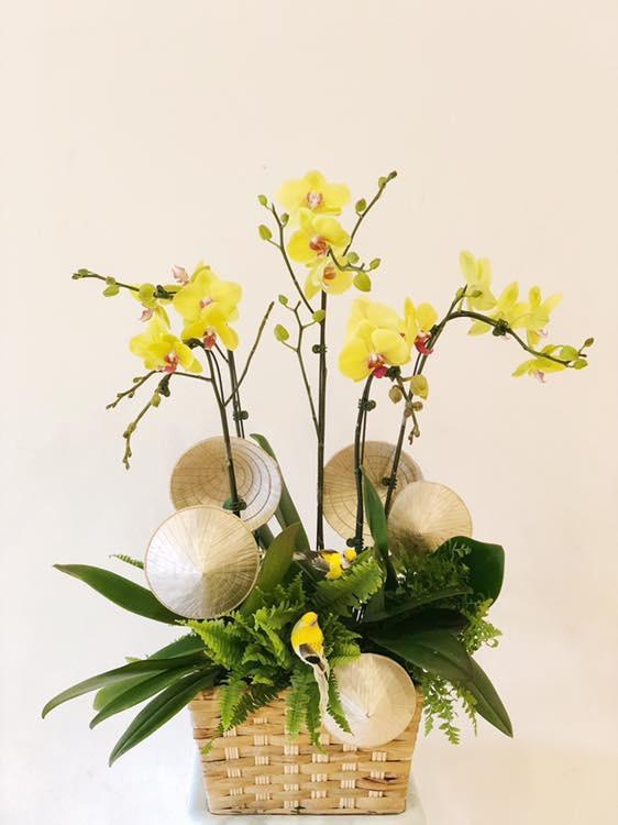 Giỏ hoa phong lan đẹp