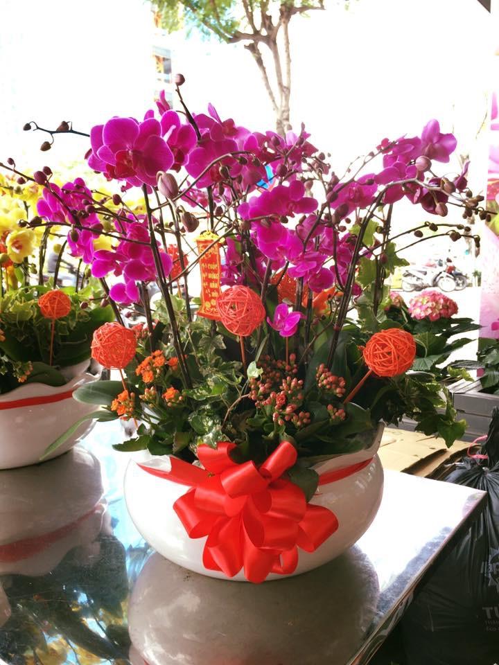 Hoa phong lan tặng cô thầy