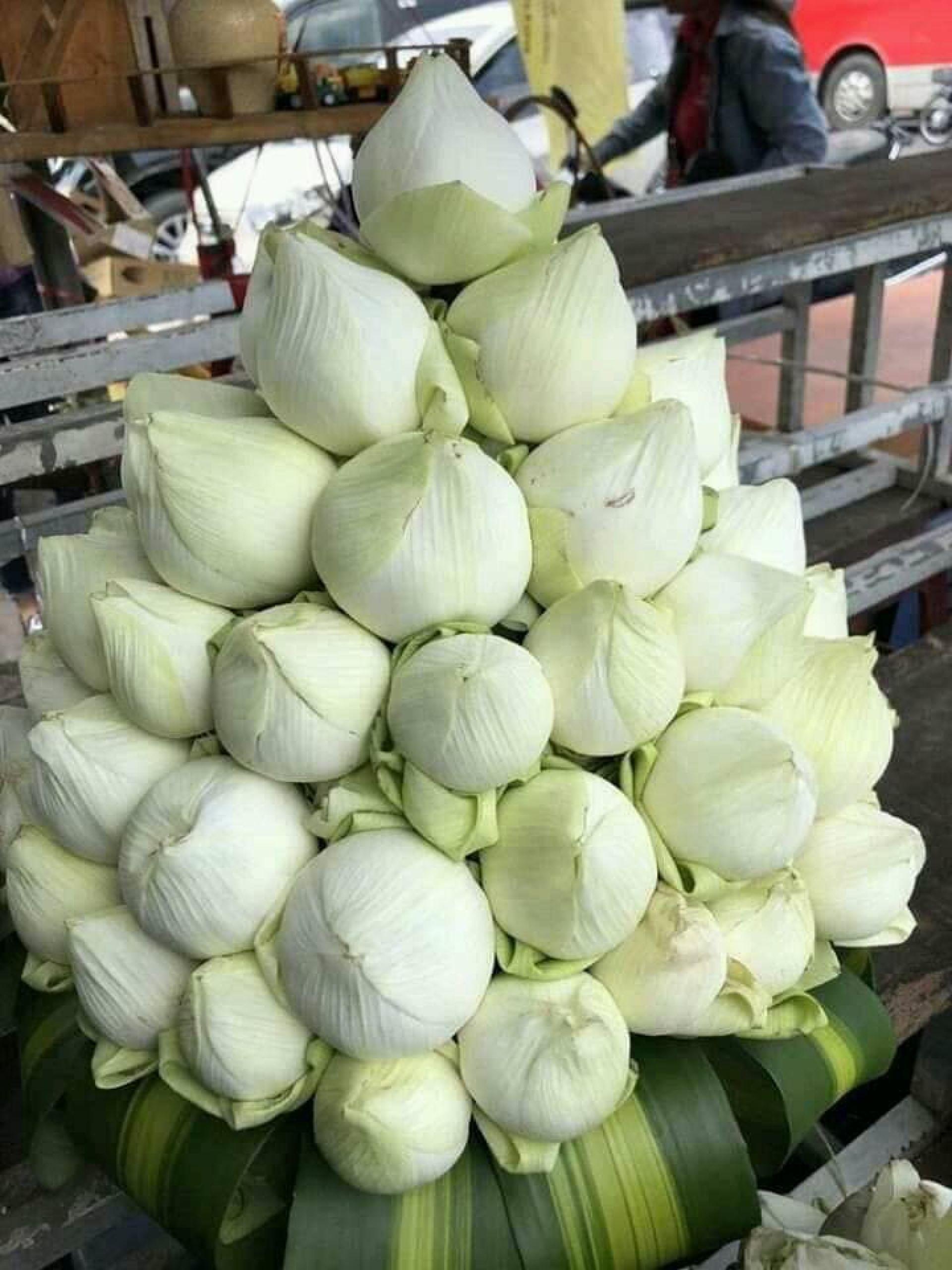 Hoa sen trắng tặng phụ nữ