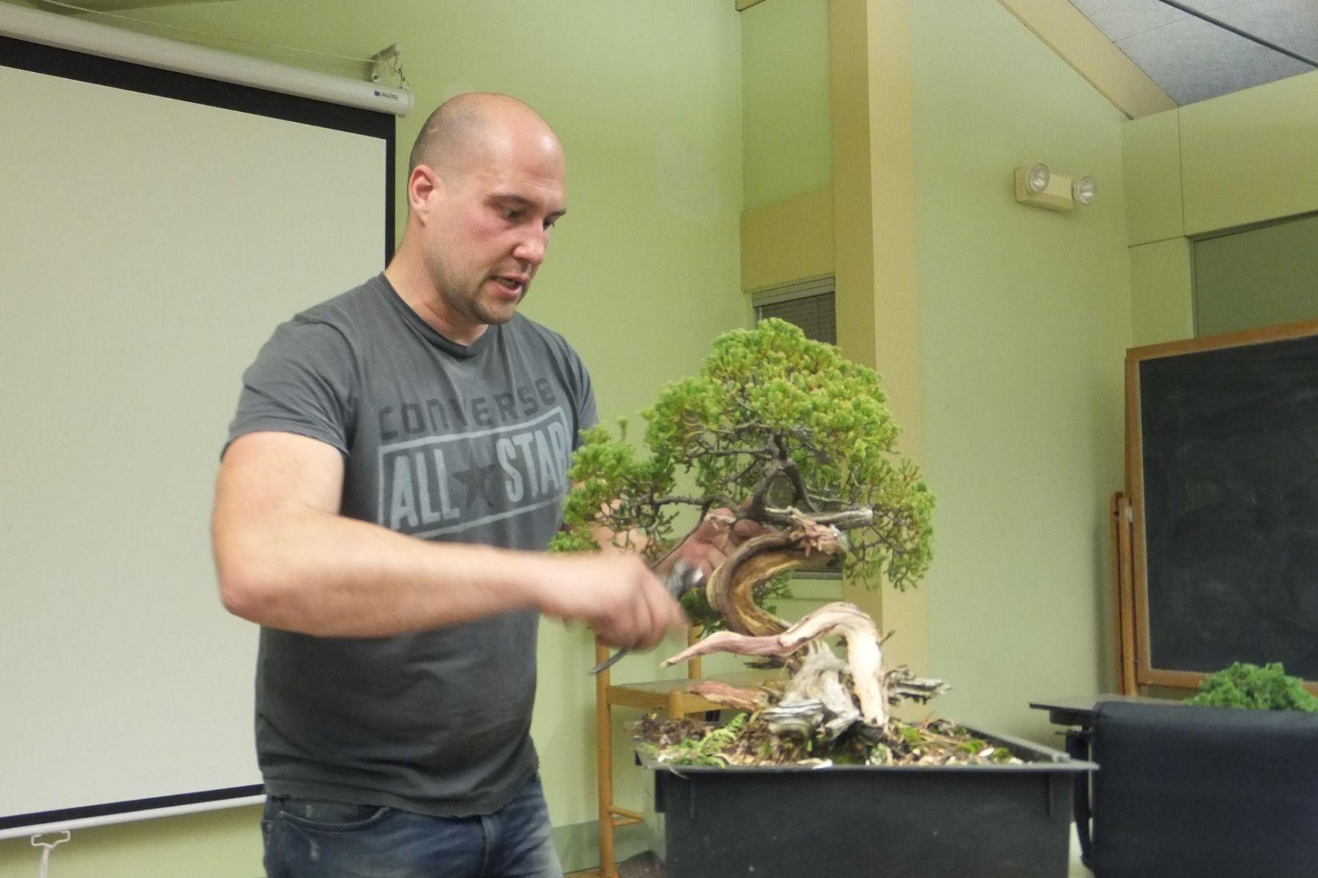 Phương pháp làm lão hóa cây