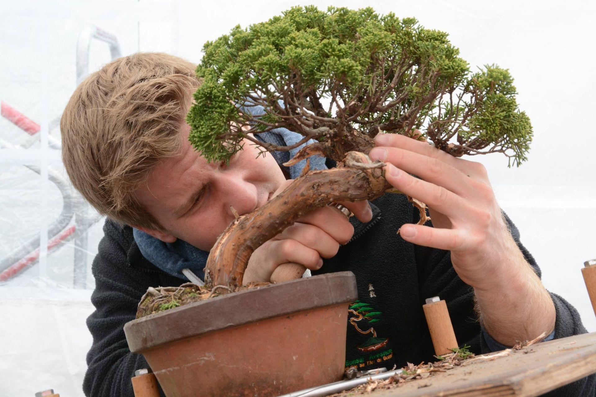 Kỹ thuật lão hóa cây