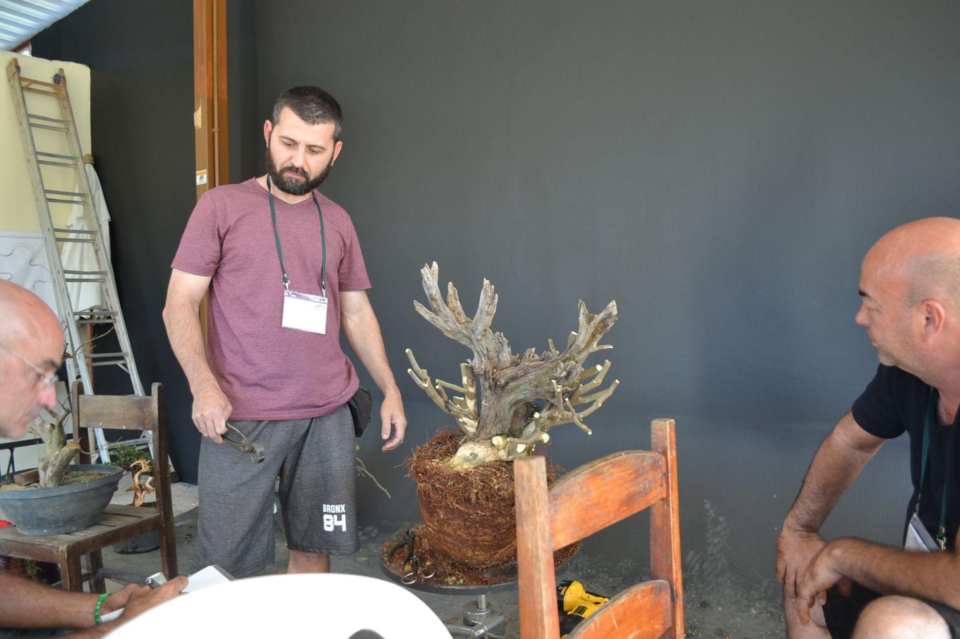 Phương pháp lão hóa cây